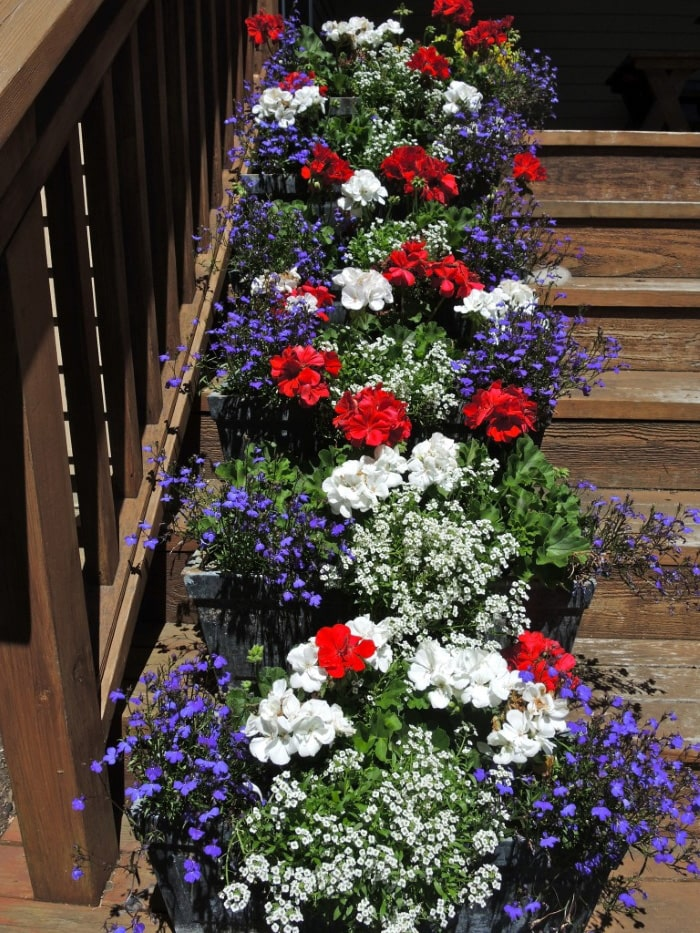 Red, white and blue flowers.