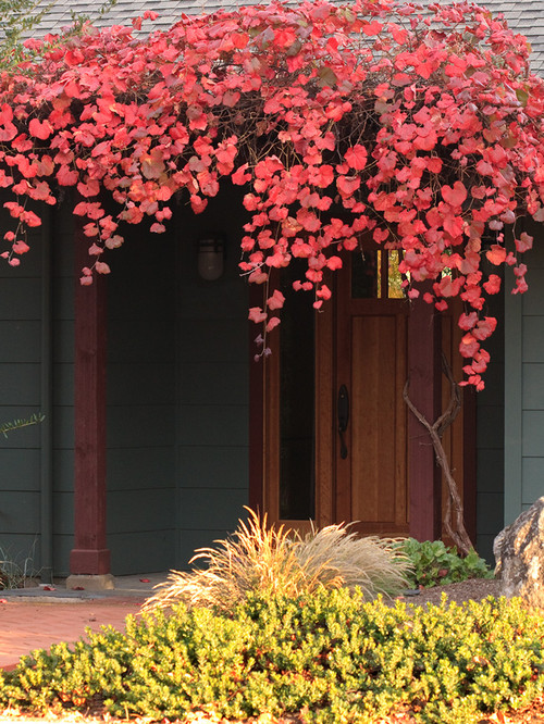 Fall vines - Curb appeal - Schlage