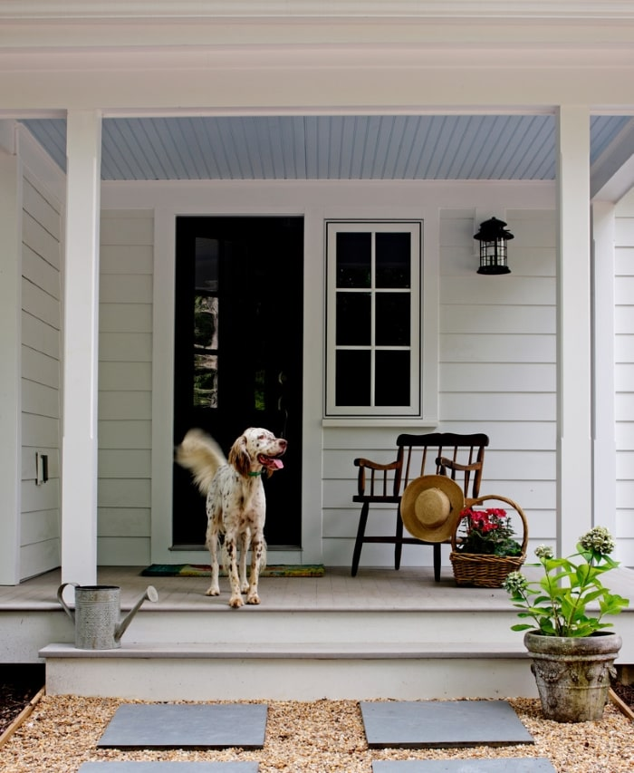 Dog on front porch.