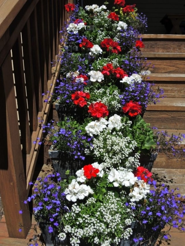 Red, white and blue flowers on front porch.