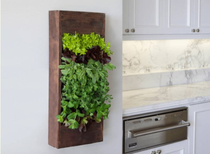 Living wall in white kitchen.