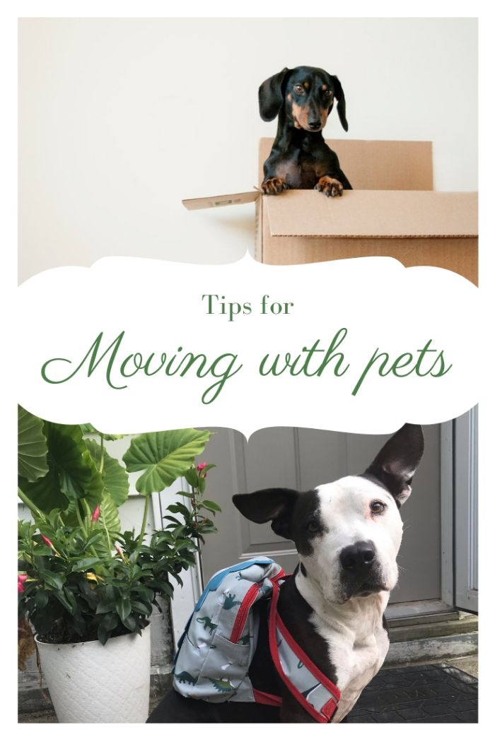 Moving with Pets Pinterest image.