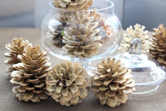 Bleached pinecones