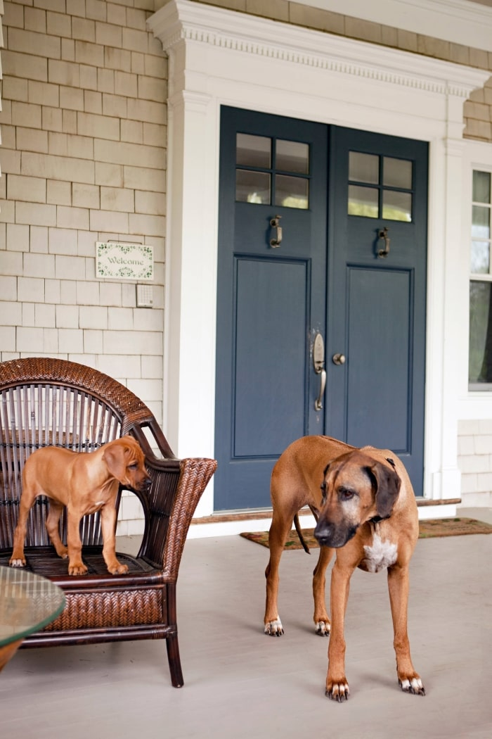 Coastal front porch with dogs.