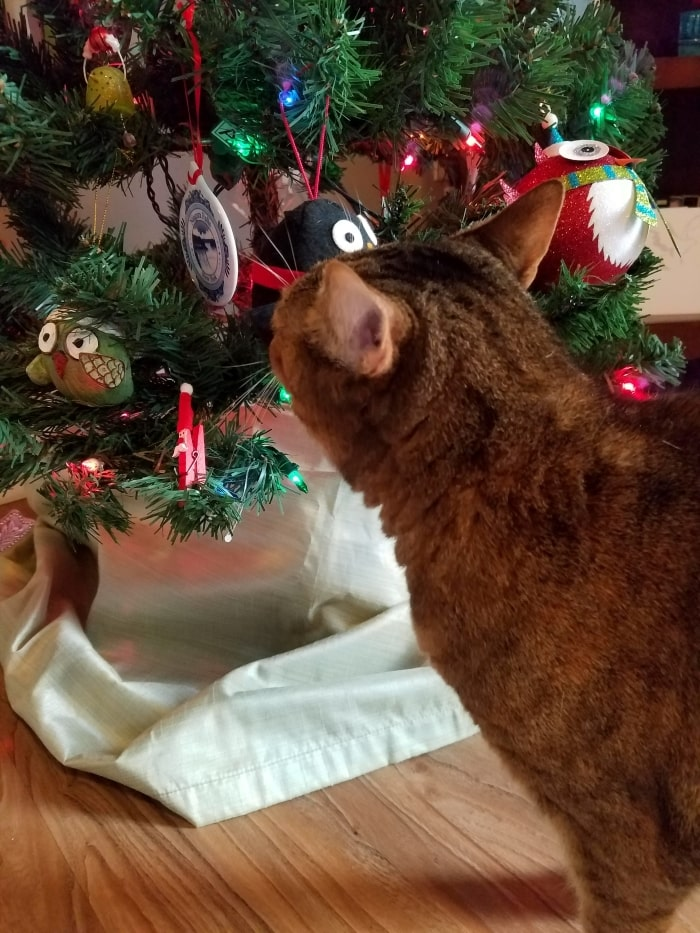Cat looking at Christmas tree.