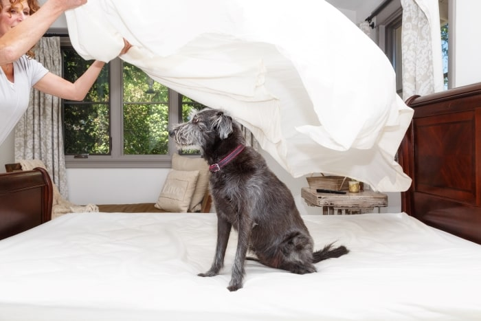 Woman making bed with dog.