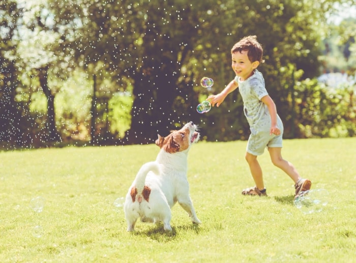 Boy and dog playing outside with bubbles.