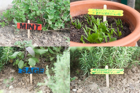 DIY popsicle stick herb garden markers.
