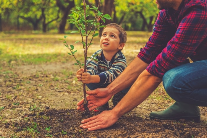Young boy with father planting a tree.