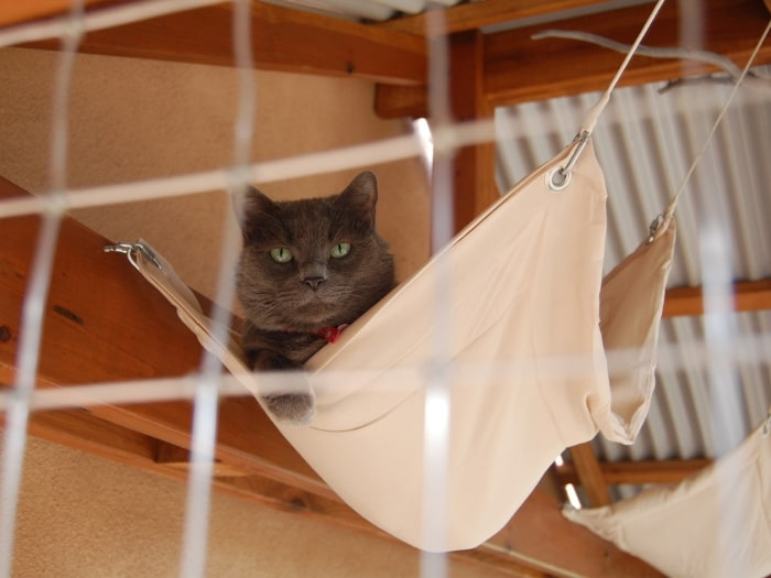 Cat laying in hammock in outdoor cat house.