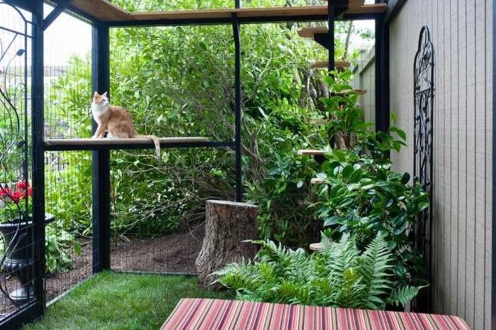Cat perched in outdoor catio with plants.