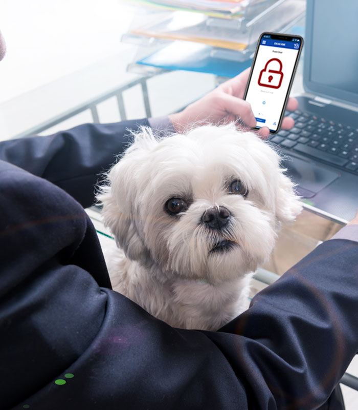 Person working in office with dog in lap and looking at Schlage Home app on phone.
