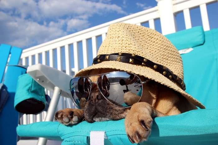 Pug with hat and sunglasses laying on beach chair.