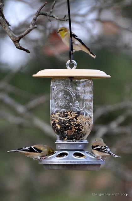 DIY bird feeder with yellow goldfinch.