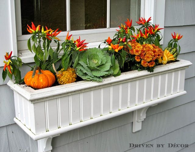 Fall window box idea with pumpkins, peppers and cabbage.