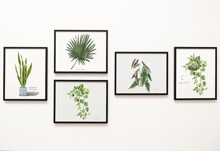 Gallery wall of plant prints.