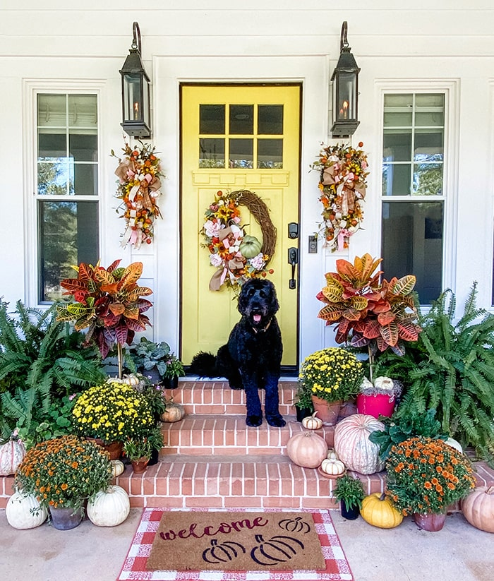 Yellow fall front door with fall decor, Schlage locks and dog