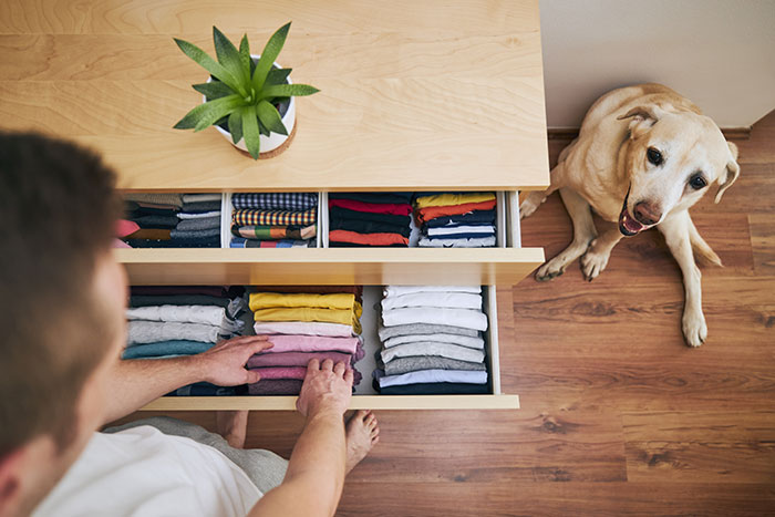 Dog watching man put clothes in drawer.