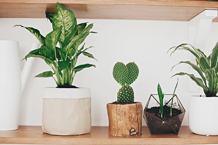 Indoor houseplant containers.