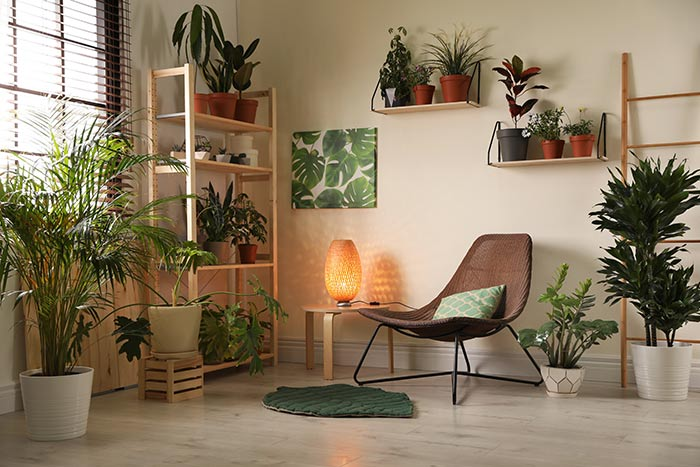 Sitting are with a variety of houseplants.