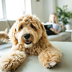 7 smart tips for trusting your home to pet sitters.