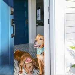 Dogs at front door | Schlage