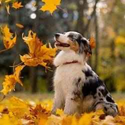 Dog with falling leaves | Schlage