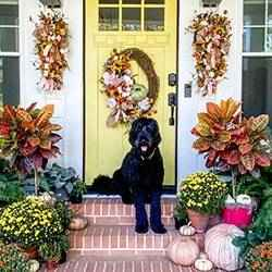 Perfect fall front door | Schlage