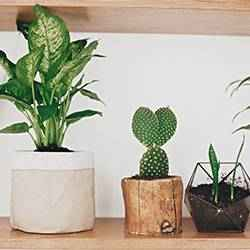 Houseplant containers | Schlage