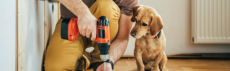 Dog watching owner use drill.